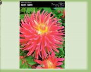 dahlia-dalia-good-earth-1-szt.jpg