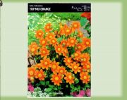 dahlia-dalia-top-mix-orange-1-szt.jpg