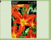 hemerocallis-liliowiec-red-magic-1-szt.jpg